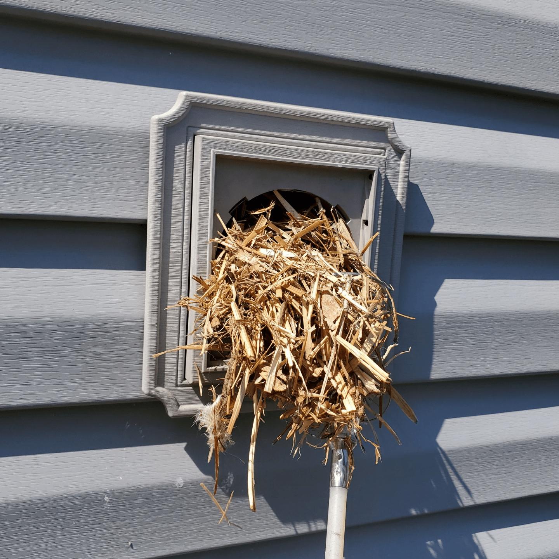 bird nest removal service