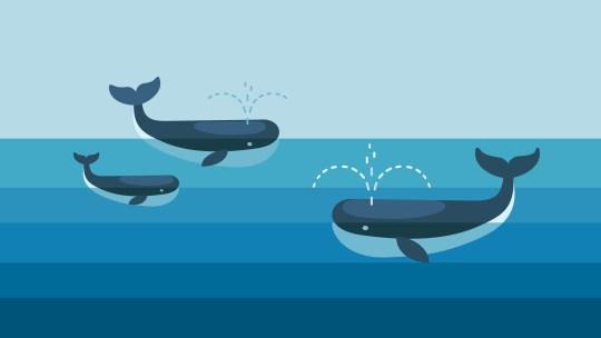Alle Hawaii questo è il mese delle balene