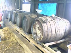 Fermentation in Whisky barrels at Ventons Devon Cyder.