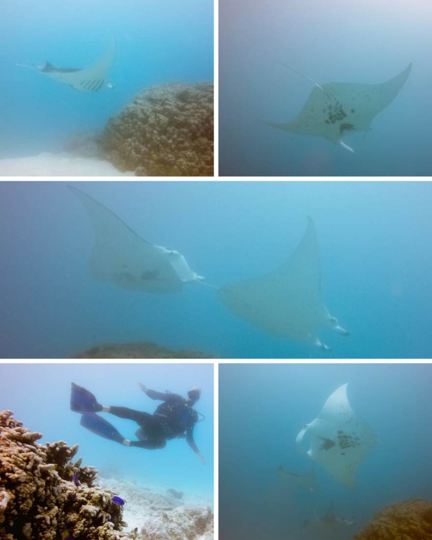 polynesie-maupiti-plongee