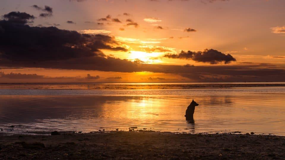 polynesie-moorea-23