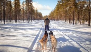 finlande-laponie-hossa-header