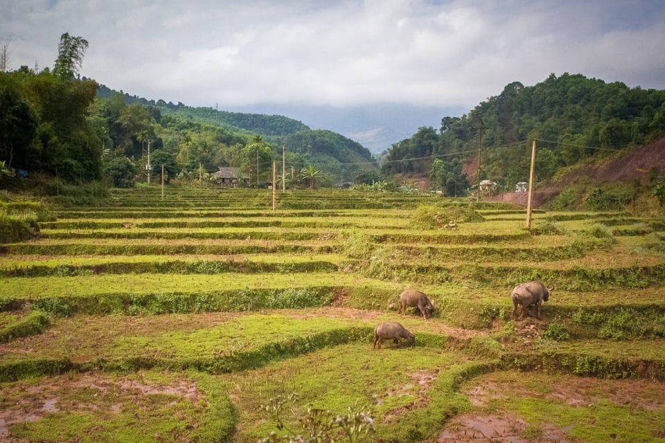 vietnam-riziere-terrasses