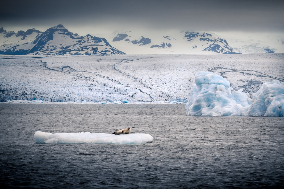 islande-ete-jokulsarlon-Vatnajökull-phoque