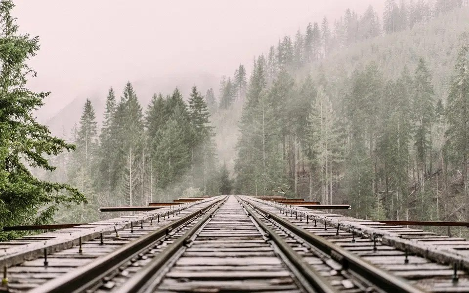 railway track in the fir trees