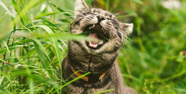Why Cats Eat Grass: Here's what you need to know