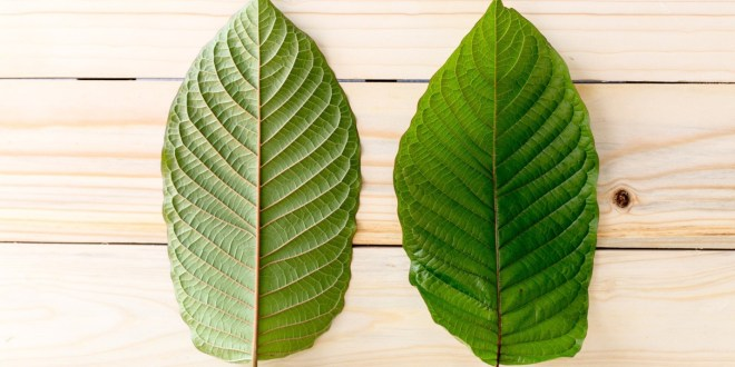 Is Kratom Legal? 5 Questions Answered