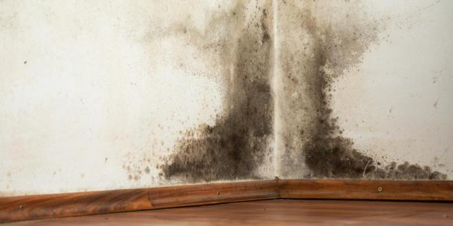 5 Tricks to Effectively Eliminate Mold