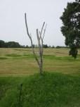 The (replica) Danger Tree