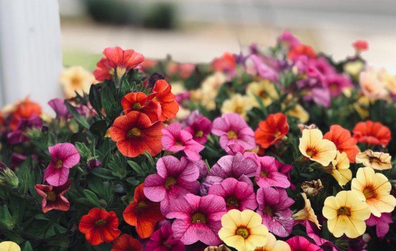 <strong>Plantas de temporada </strong> <br> Trae la primavera a tu balcón con nuestra selección de plantas
