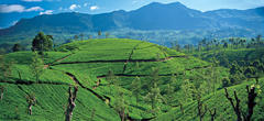 LGBT tours of Sri Lanka