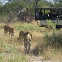 Gay African Safari Group
