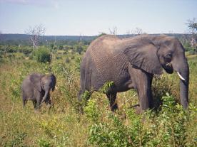 Gay Safari Tours Botswana South Africa
