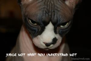 Judging is for the dogs, not hairless cats