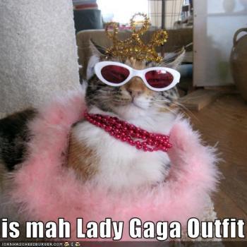 Lady Gaga Lolcat