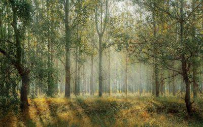 Groene oplossing voor de bosbouw
