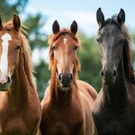 The 19 Most Expensive Horse Breeds In The World Ventured