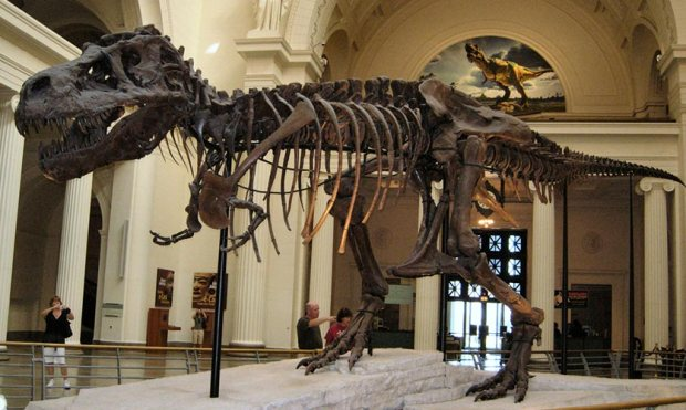 Image result for american museum of natural history