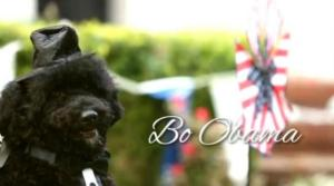 First dog and sponsor of Bo-bamacare