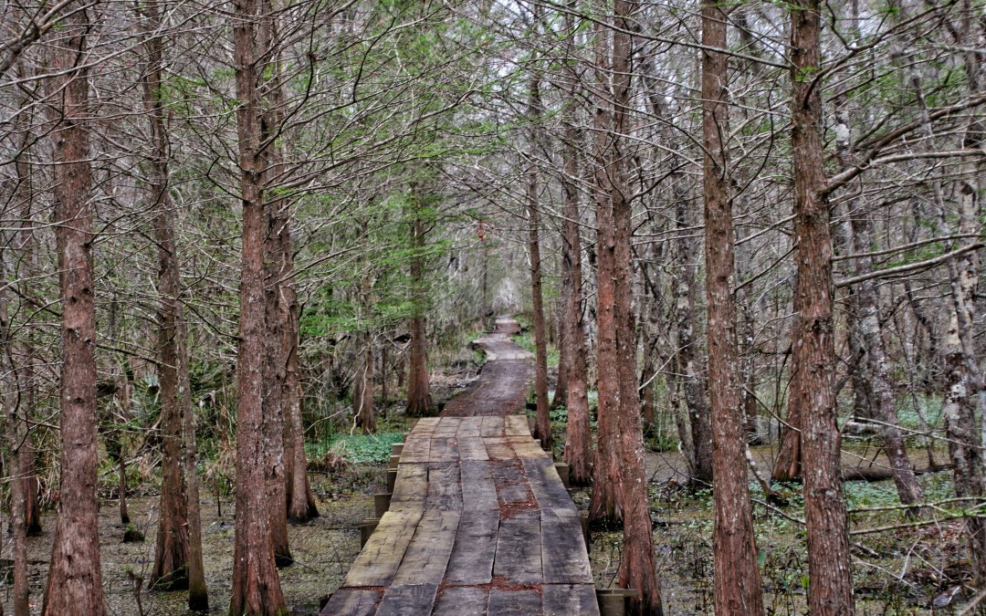 The Best Day Trip To The Bayou From New Orleans