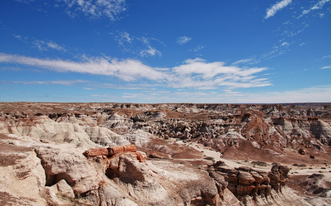 Exploring The Petrified Forest: The Case Of The Disappearing Park
