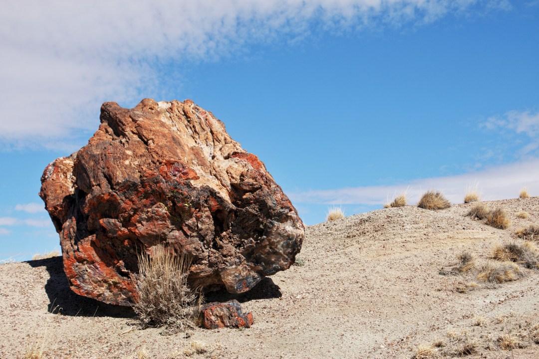 Petrified Log Petrified Forest National Park