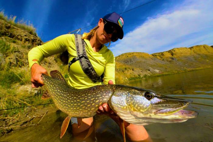 Faceless Fly Fishing Media pike