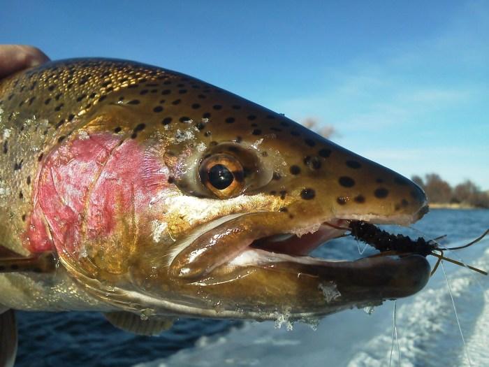 FishTales Madison