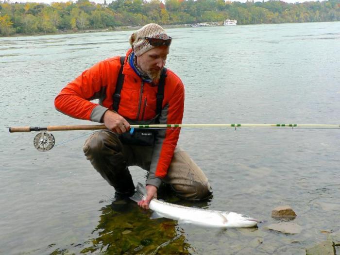 Seale Fiberglass Spey Rod