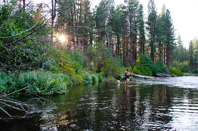 Fly Fishing the Metolius