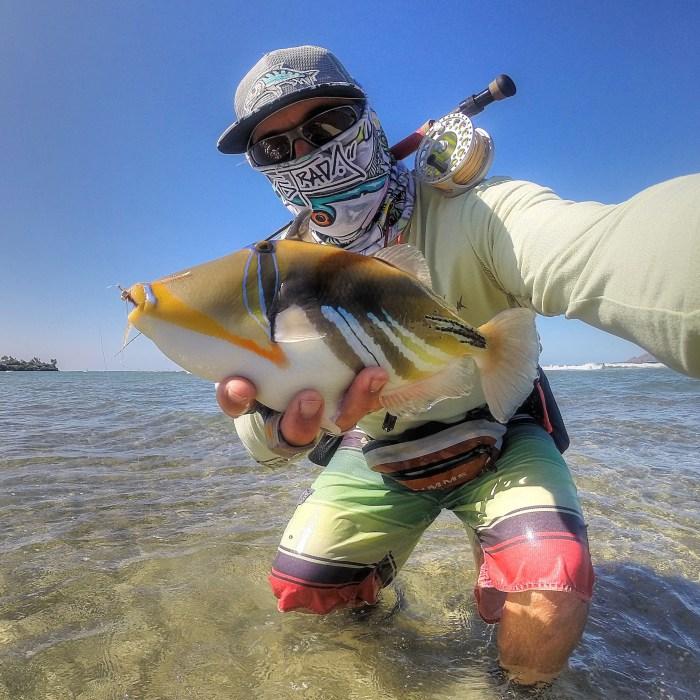 Hawaii triggerfish