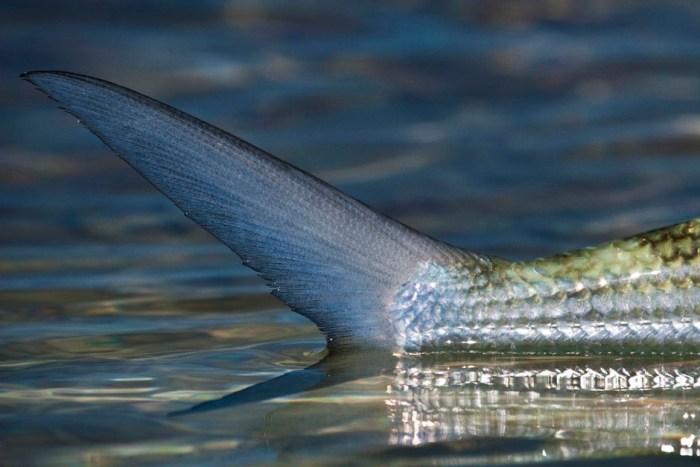 1-best-saltwater