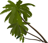 clippalm_trees_gregoir_03.svg.med