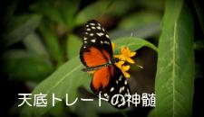 top-kiji216