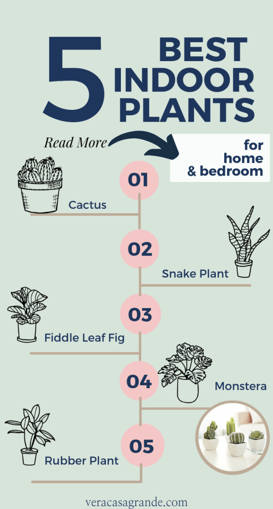 best plants for home and bedroom