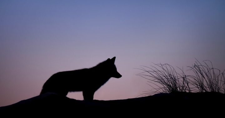 January full wolf moon