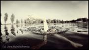 Kraulschwimmen, Kraul Schwimmen, Freestyle Swimming Technique, Kraultechnik, Open Water Swimming, Freiwasserschwimmen, Freiwassertechnik, Schwimmen im See, Schwimmen, Schwimmerin, Athletin