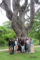 Polaznici letnje skole engleskog jezika u Botanickoj bašti Oksford univerziteta, Verbalisti