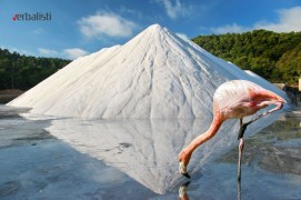 Flamingo u solani, Ibiza