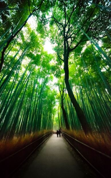 The Bamboo Forest of Sagano, Photograph by MIGUEL MICHAN (Lost in Japan on Flickr)