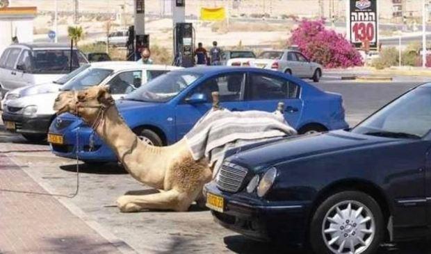 Parking in Jericho, Palestine