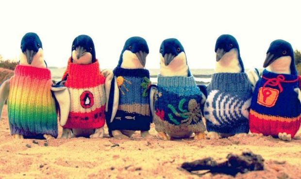 Penguins Wear Hand-Knitted Jumpers