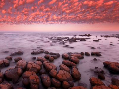 stromatolites at dawn, Shark Bay