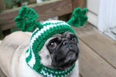 Paddy's Day Pug 1
