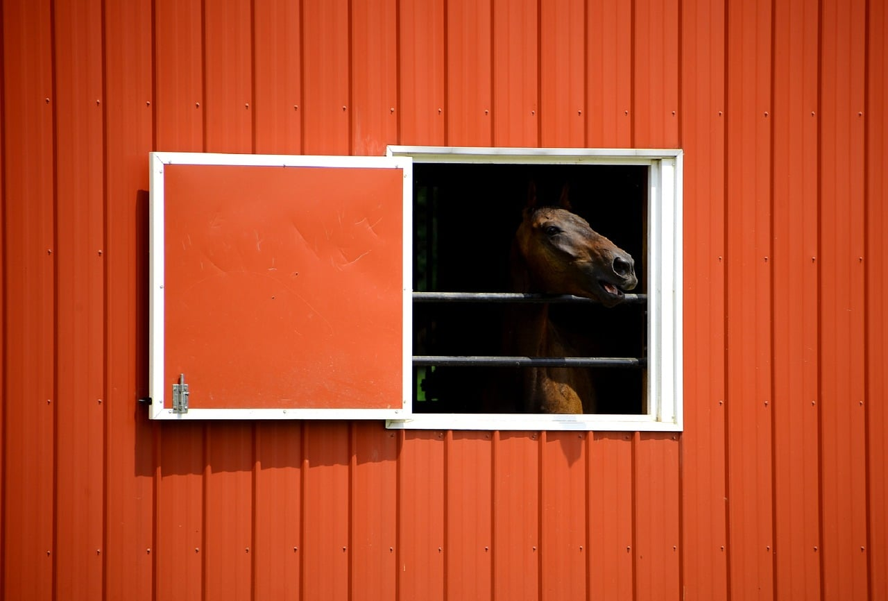 Een Paardenstal Kopen Of Bouwen Richtprijzen