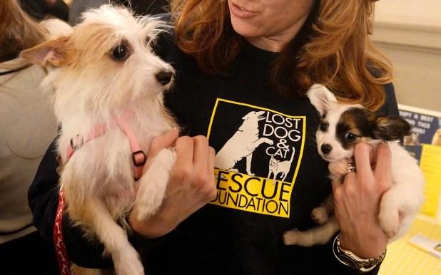 En diferentes países realizan campañas masivas de adopción y cuidado de animales que están en la calle, pero ¿qué hay de los seres humanos? / EFE