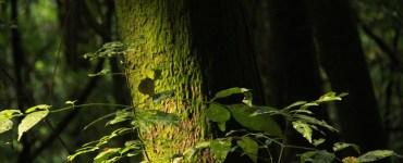 bosque mesófilo nevado de colima
