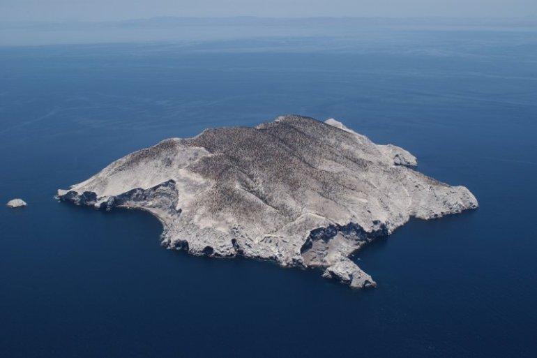 Isla San Pedro Martir. Foto: Áreas Protegidas de México