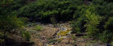 Uno de los afluentes contaminador por el derrame en la mina Buenavista, del Grupo México. Foto: Héctor Guerrero