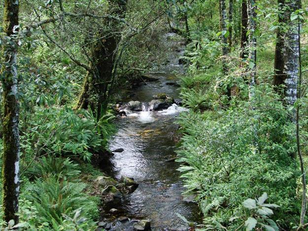 Sierra de Manantlán. Foto: Conanp